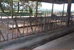 Galpão Free Stall